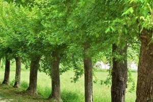 khutbah-jumat-pohon-keimanan